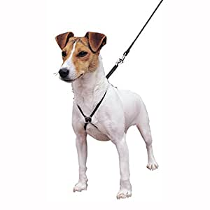 Lupi Dog Harness Reviews