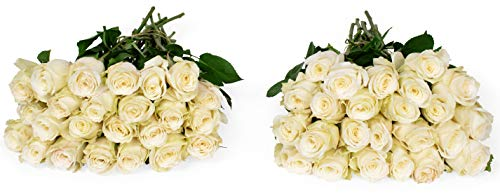 Benchmark Bouquets 50 White Roses Farm Direct (Fresh Cut Flowers)