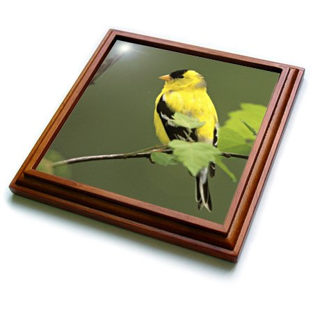 3dRose trv_83540_1 Male American Goldfinch Bird NA02 AJE0203 Adam Jones Trivet with Ceramic Tile, 8 by 8