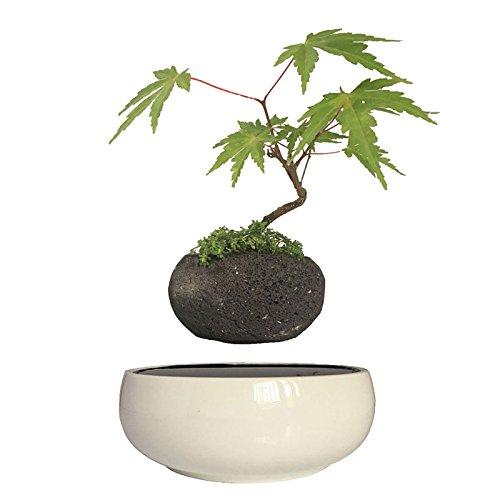 High Tech Gadgets Magnetic Levitation Air Bonsai Ceramic Garden Pots Plant Pots Bonsai Pots Birthday Gifts for Men (volcanic stone pot)