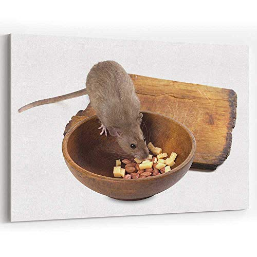 - Brown Rat Eating from Wooden Plate Canvas Art Wall Dcor Modern Wall Decor/Home Decoration