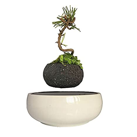 High Tech Gadgets Levitation Air Bonsai Ceramic Garden Pots Plant Pots Bonsai Pots Birthday Gifts for Men (Volcanic Stone Pot) FYBONSAI