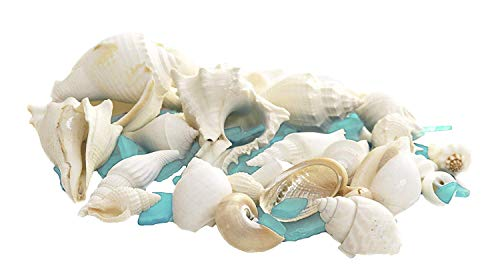 White Decorative Sea Shell and Turquoise Sea Glass  1 Pound Shells for Decoration   Shells for Craft   Plus Free Nautical Ebook by Joseph -