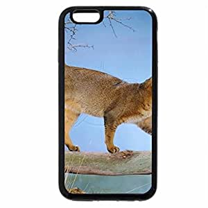 iPhone 6S / iPhone 6 Case (Black) Usual Abyssinian Cat