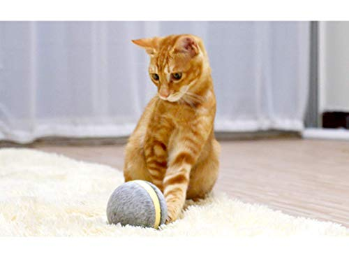 Cheerble Wicked Ball, Wool Style of Wicked Ball Designed specifically for Your Cats, 100% Automatic Ball to Keep Your Cats Company All Day (Artificial Wool Wicked Ball)