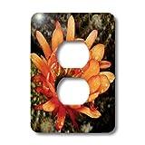 3dRose lsp_32390_6 Decorative Colorful Garden Botanic Classic Plant Sw Southwest Desert Cactus Red Orange Rain Flower 2 Plug Outlet Cover