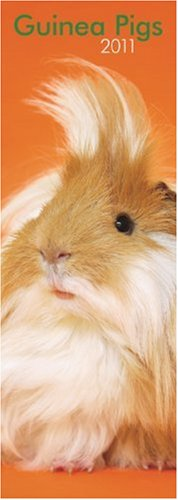 2010 Guinea Pigs Calendar - Guinea Pigs 2011 Slimline Calendar (English and Multilingual Edition)