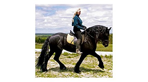 Black-As-Knight Coat Enhancer for Blacks and Bay Horses 7 LBS by Black-As-Knight (Image #3)