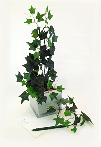 English Ivy Four Pen Plant with White Square Glass Vase for Home, Office, Business, Décor and Supplies - White Ivy Glass
