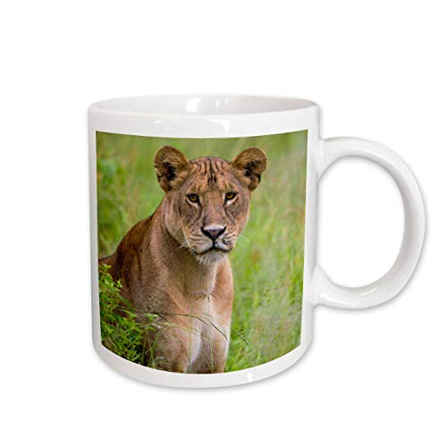 - 3dRose Danita Delimont - Lions - Tanzania. African lioness, Panthera Leo, at Tarangire National Park. - 15oz Two-Tone Green Mug (mug_312521_12)