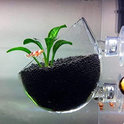 Amazon Com Aquatic Plant Crystal Glass Pot Aquarium Aquascaping Planted Tank Shrimp 1 Piece Pet Supplies