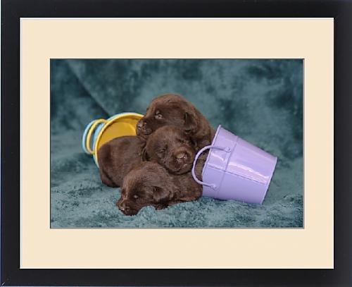 Framed Print of Pile of Sleeping Labrador Retriever Puppies, Phelan, California