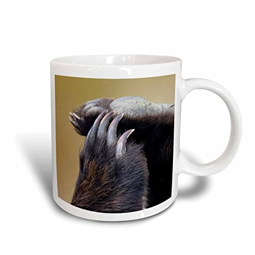 3dRose Grizzly Bear Paws and Claws US02 JGS0037 Jim Goldstein Ceramic Mug, - Bear Pic Grizzly