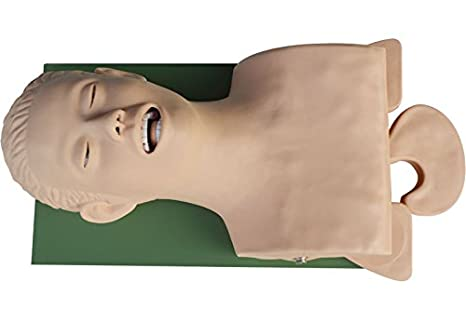 IntBuying Teaching Study Model Airway Management Trainer Intubation