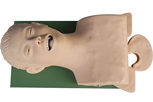 IntBuying Teaching Study Model Airway Management Trainer Intubation Manikin 220V by IntBuying Science Education model
