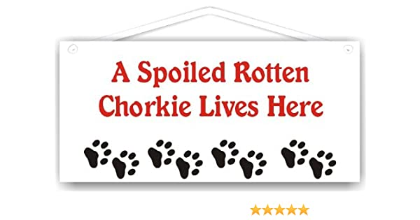 Spoiled Rotten >> Amazon Com A Spoiled Rotten Chorkie Lives Here Other Products