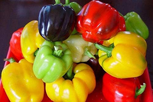 Mini Bells Mix Bell Pepper Seeds (20 Seed Pack)