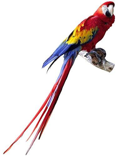 Autocollant sticker voiture moto deco animal animaux oiseau perroquet enfant