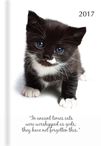 Kittens Daily Padded Calendar Planner product image