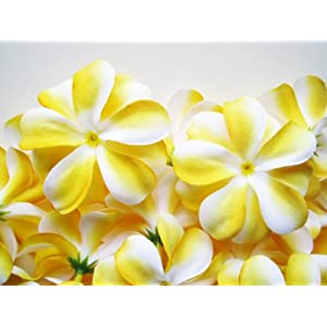 "(24) Yellow White Hawaiian Plumeria Frangipani Silk Flower Heads - 3"" - Artificial Flowers Head Fabric Floral Supplies Wholesale Lot for Wedding Flowers Accessories Make Bridal Hair Clips Headbands Dress 19"