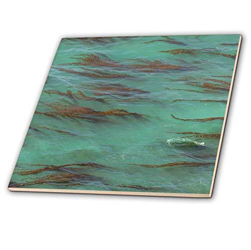 3dRose Danita Delimont - Natural Patterns - USA, California, Big Sur. Strands of ocean kelp forest. - 8 Inch Glass Tile - Strand 8in Natural