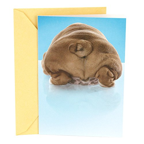 Hallmark Shoebox Funny Thank You Greeting Card (Dogs Butt) (Thank You Card From Dog)