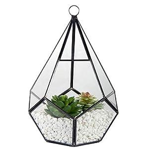 "Glass Geometric Terrarium Container, ZOUTOG 6.7"" Air Plant Holder Window Sill Decor Shelves, Succulent Plant Cacti Fern…"