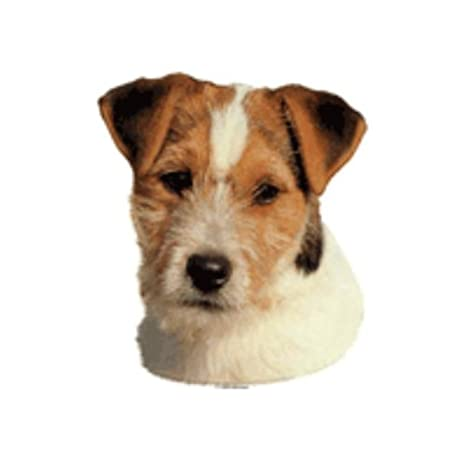 World Stickers schwandt doméstica Animales requisitos 12192 Pegatinas 4 unidades aprox. 80 x 80 mm para warnschild Jack Russell Terrier Rojo: Amazon.es: ...