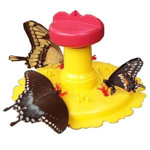 Songbird Essentials SE78200 Butterfly Feeder (Set of 1)
