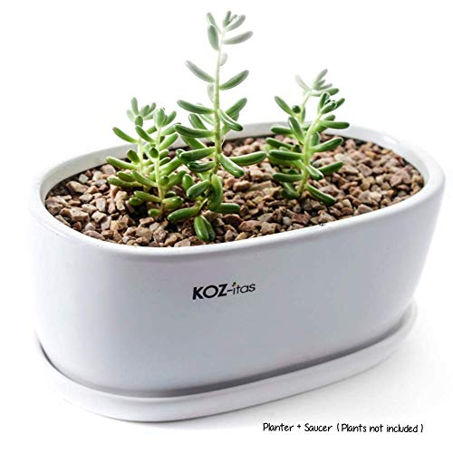 KOZitas 8.5 inch Minimalist Oval Planter, White Ceramic Succulent Planter Pots/Mini Flower Indoor Planter Terrarium with Draining Saucer. Window Box Apt for Cactus, Herbs, Plants and Flowers ()