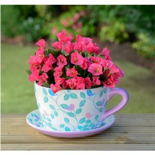 Giant Butterfly Design Tea Cup And Saucer Planter Plant Pot Mothers