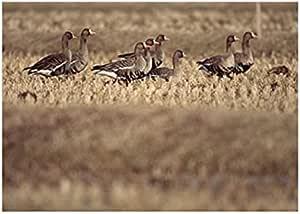 صورة بلوك الطيور المناظر الطبيعية تابلوه 23 سم × 18 سم