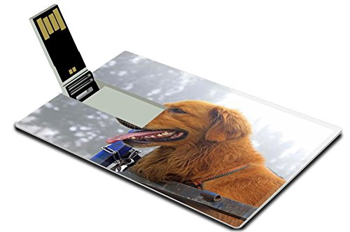 Luxlady 32GB USB Flash Drive 2.0 Memory Stick Credit Card Size Pet dog in the compartment closeup of photo IMAGE 33403507