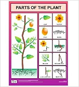 Buy Parts Of The Plant Chart For Kids Book Online At Low Prices In