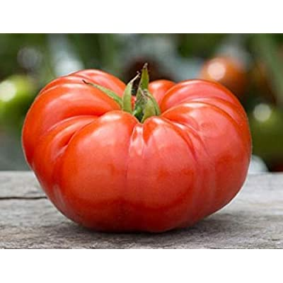 David's Garden Seeds Tomato Beefsteak SL8472 (Red) 50 Non-GMO, Heirloom Seeds : Garden & Outdoor