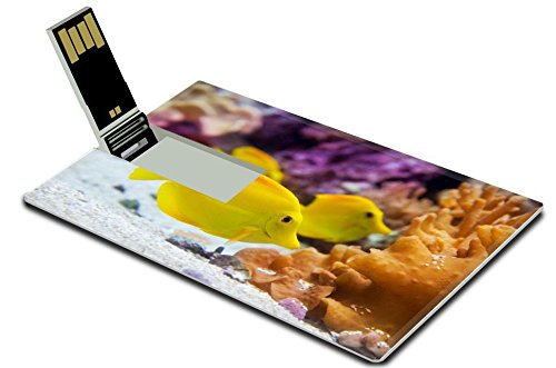 MSD 32GB USB Flash Drive 2.0 Memory Stick Credit Card Size Image ID 20076394 yellow tang fish Zebrasoma flavesenes on artificial reef - Yellow Tang Animals