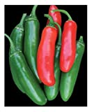 David's Garden Seeds Pepper Serrano Tampiqueno SL1413 (Red) 50 Non-GMO, Heirloom Seeds