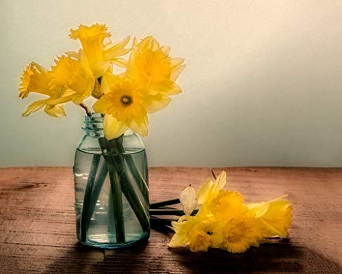 Daffodils in a Blue Jar. Fine Art Still Life Photography Print for Home Decor Wall Art