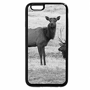 iPhone 6S Case, iPhone 6 Case (Black & White) - Bull and Cow
