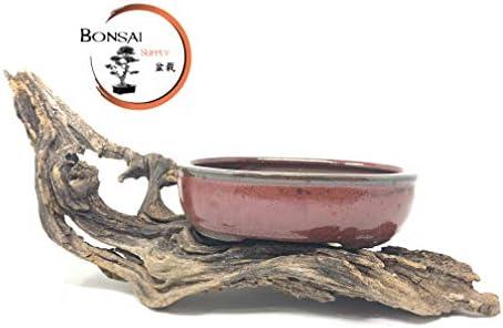 Bonsai Tree Pot Glazed Unglazed 8 More Colors Available