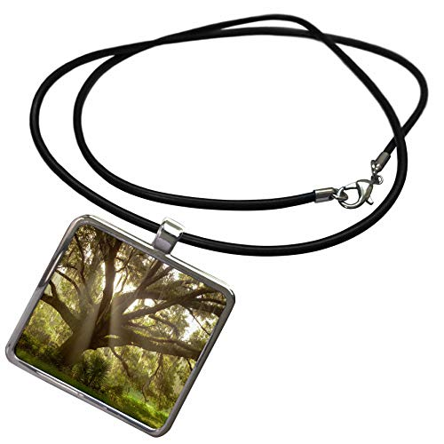 (3dRose Danita Delimont - Trees - Beautiful Southern Live Oak Tree, Quercus Virginiana, Central Florida - Necklace with Rectangle Pendant)