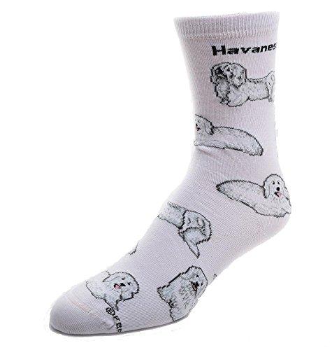 Havanese Socks Poses 2