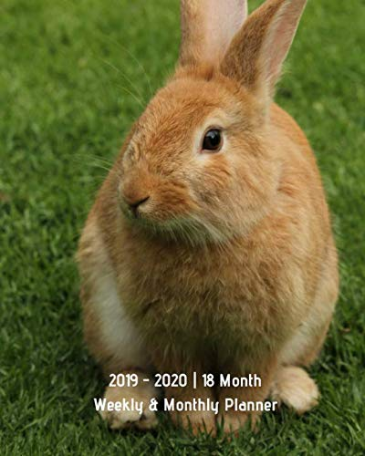 2019 - 2020 | 18 Month Weekly & Monthly Planner: July 2019 to December 2020 | Calendar in Review/Monthly Calendar with U.S./UK/ Canadian/Christian/Jewish/Muslim Holidays–Notes 8 x 10 Rabbit Bunny Pet