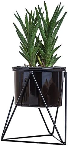 Planter Pots Indoor Tm 6 Inch Modern Garden White Ceramic Round Bowl With Metal Air Plant Stand For Succulent Planter Cactus Black Black Amazon Ca Patio Lawn Garden