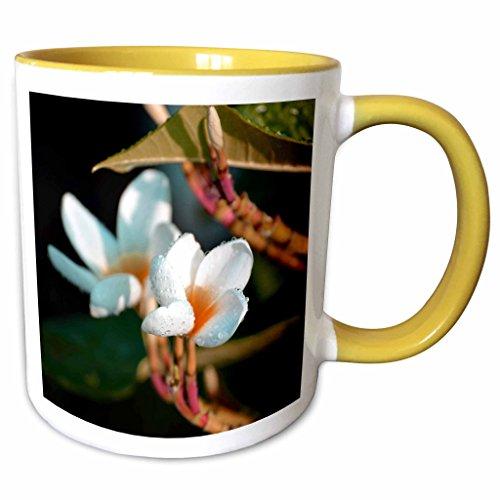 3dRose Susans Zoo Crew Photography Flowers - lei flower orange colorized - 11oz Two-Tone Yellow Mug (mug_184432_8) (Flower Two Lei Tone)