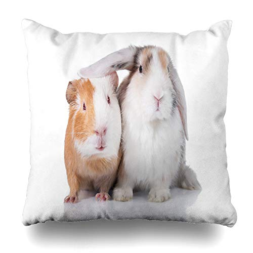 ArTmall Throw Pillow Case Eared Lop Funny Rabbit Guinea Pig White Wildlife Pet Bunny Adorable Adult Breed Cavia Couple Design Zippered Pillowcase Square Size 18 x 18 Inches Home Decor Cushion Covers (Best Pet Pig Breeds)