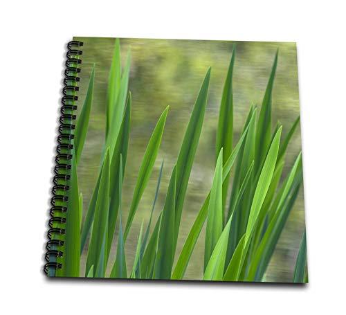 (3dRose Danita Delimont - Natural Patterns - USA, Washington State, Bainbridge Island. Cattails on pond in spring. - Mini Notepad 4 x 4 inch (db_315118_3))