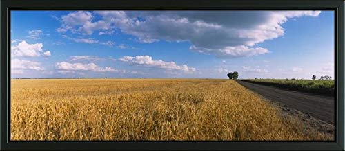 - Easy Art Prints Panoramic Images's 'Wheat Crop in a Field, North Dakota, USA' Premium Framed Canvas Art - 20