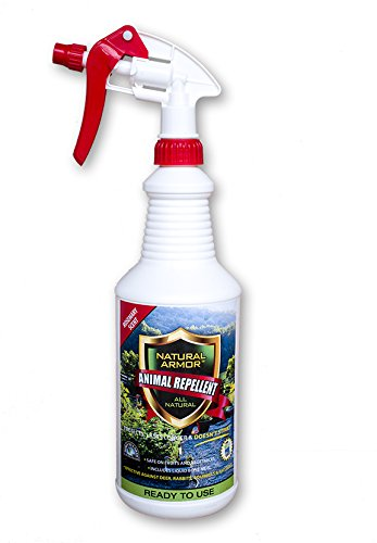 Natural Armor Repellent Spray for Rodents & Animals. Cats, Rats, Squirrels, Mouse & Deer. Repeller & Deterrent for Dogs, Critters, Mice, Raccoon & Skunk Rosemary Quart Ready to Use (Best Way To Keep Squirrels Out Of Garden)