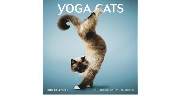 Yoga Cats 2010 (Wall Calendar): Amazon.es: Dan Boris: Libros ...